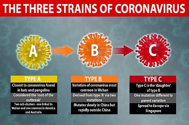 3 Types of Coronavirus Strains