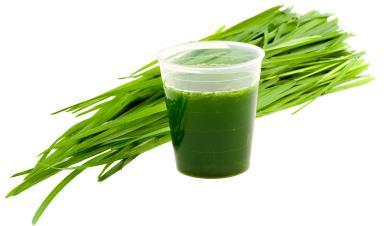Wheatgrass Juice Benefits