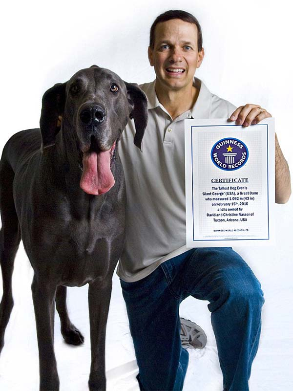 Worlds Tallest Dog With Guinness Certificate